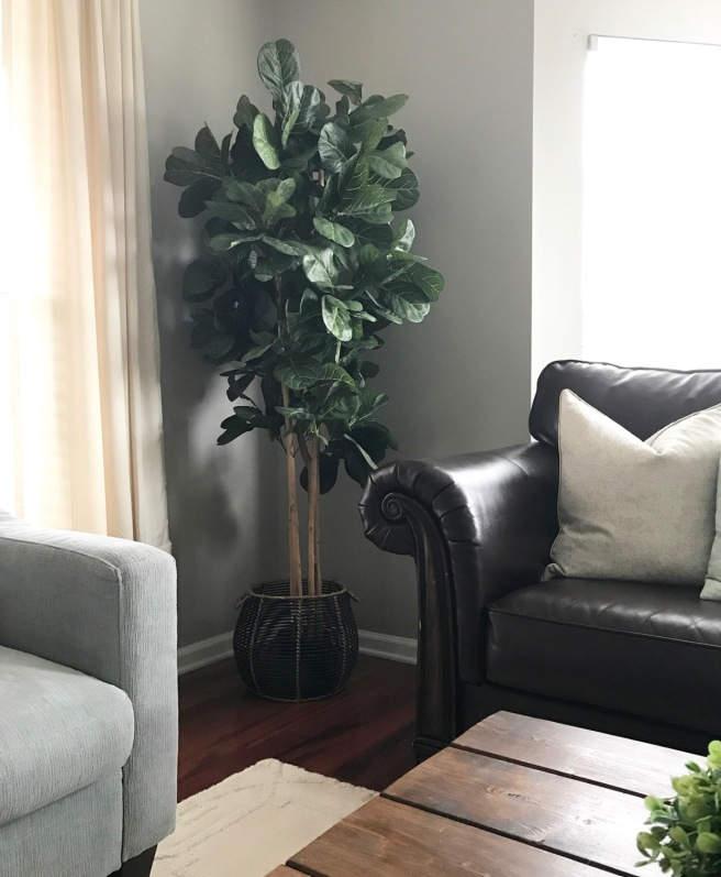 Amazon Fiddle Leaf