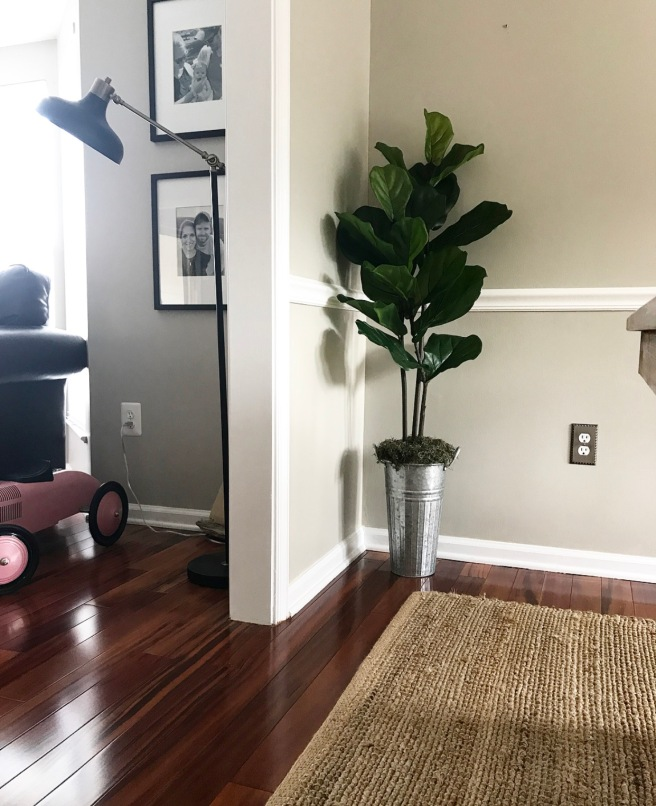 DIY Fiddle Leaf Fig